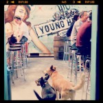 Young Henry's, Newtown