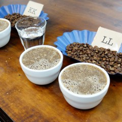 Cup of Excellence cupping, Single Origin Roasters